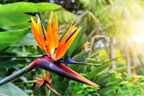 극락조 꽃: 새로운 꽃무늬 트렌드