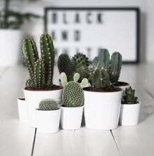 8 kamerplanten die je zou moeten kennen zoals de cactus