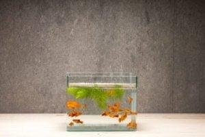 Je aquarium binnenshuis verfraaien met kiezelstenen