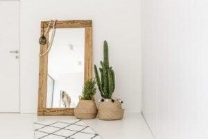 Kies een aantal mooie potten voor je favoriete sterke huisplanten