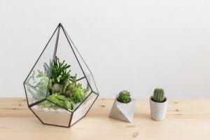 Verschillende soorten cactussen voor in je huis