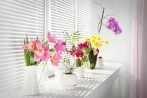 Lekkere geuren in je huis zoals bloemengeuren