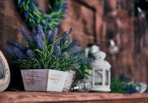 Houten bloempotten met lavendel