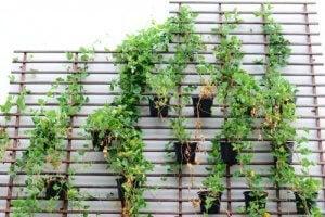 Kamerplanten als botanische decoratie