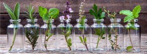 Licht is belangrijk voor de groei van je planten