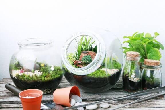 Decoratieve glazen terrariums