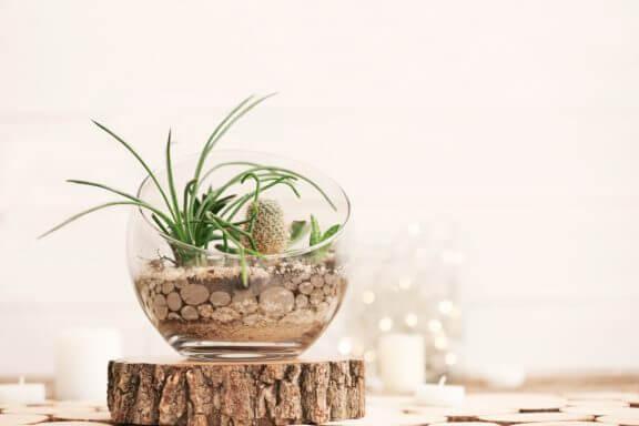 Terrarium op een houten plank