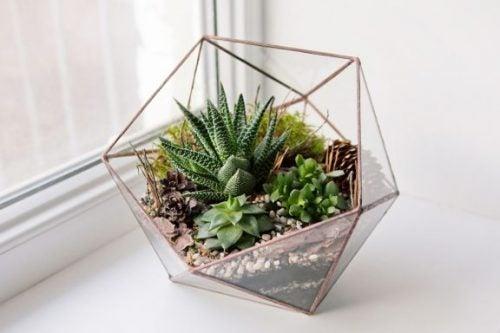 5 soorten decoratieve terrariums voor je huis