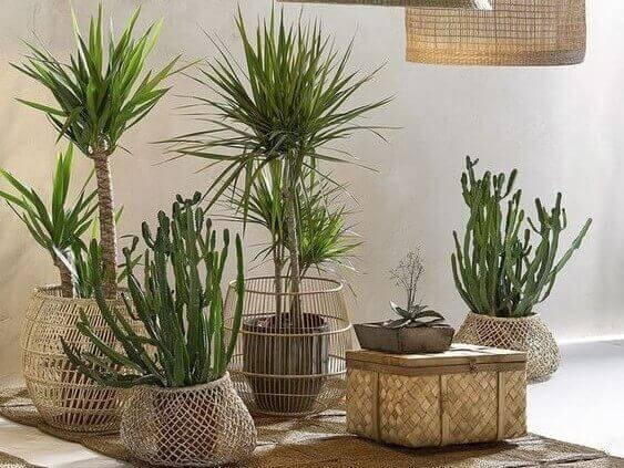 Planten in rieten manden