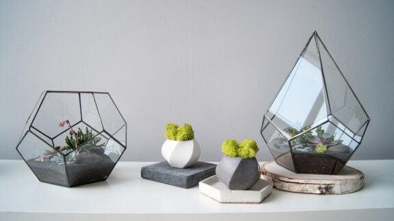 Terraria en kleine plantjes
