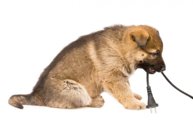 Pup met een snoer in zijn mond