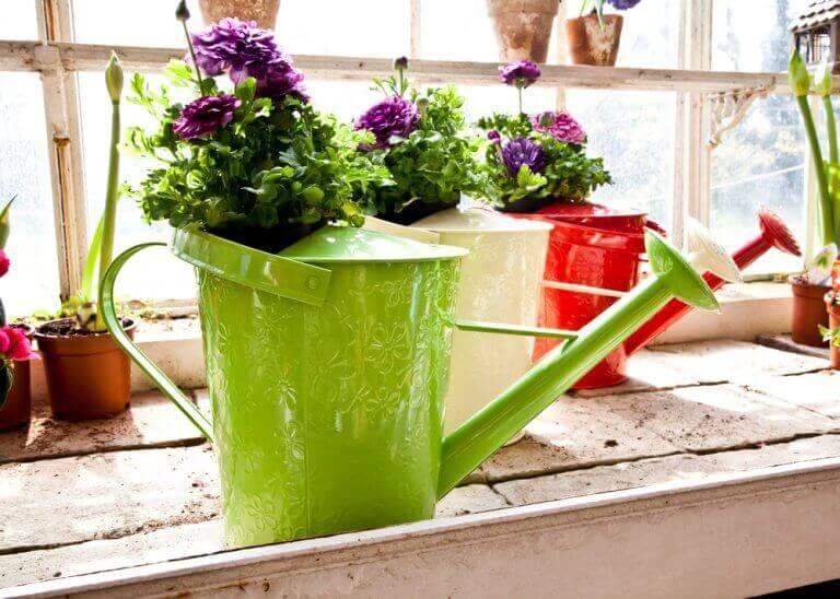 Gekleurde gieters met bloemen