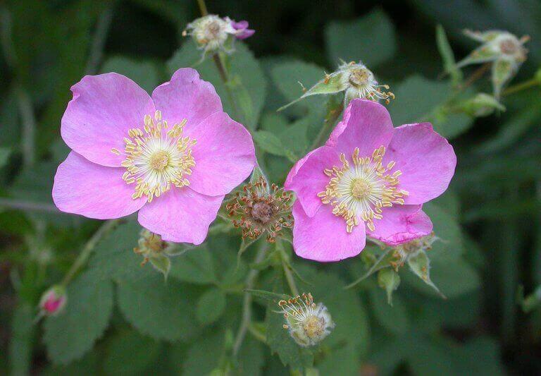 Soorten klimplanten voor je tuin
