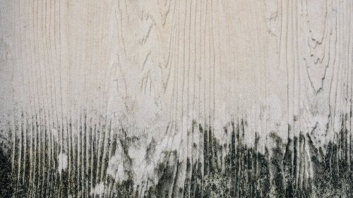 Schimmel van hout verwijderen in 3 stappen