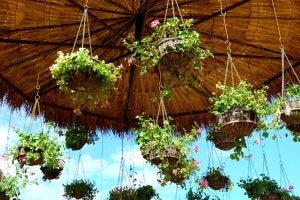 Bruiloftsdecoratie van hangende planten
