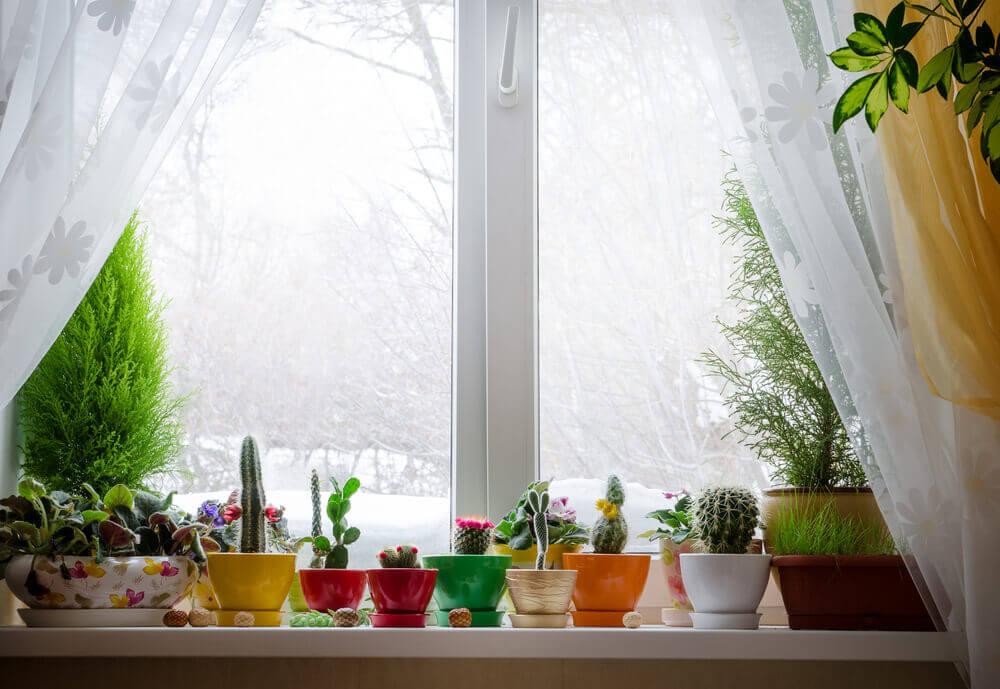 Raam met plantjes in de vensterbank