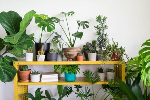 Planten als decoratieve woonaccesoires