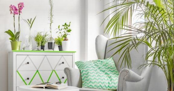 Decoratieve ideeën met planten
