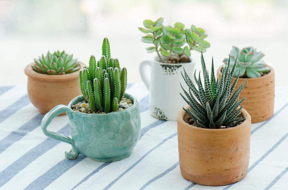 Kleine potjes met plantjes