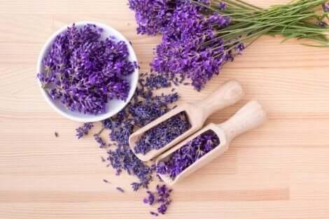 Droogbloemen lavendel