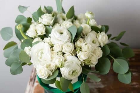 Ranonkel gebruiken in een boeket van droogbloemen