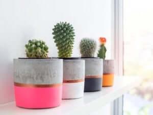 Cactussen in een pot