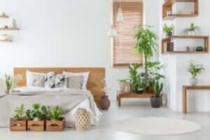 Grote planten voor een eleganter huis