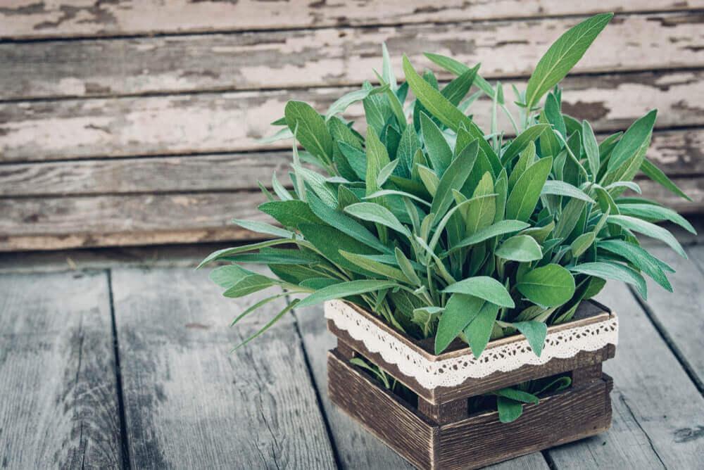 Plant in een krat