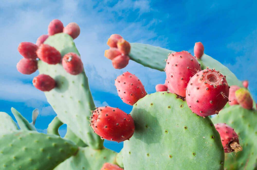 Een cactus met rode bloesems