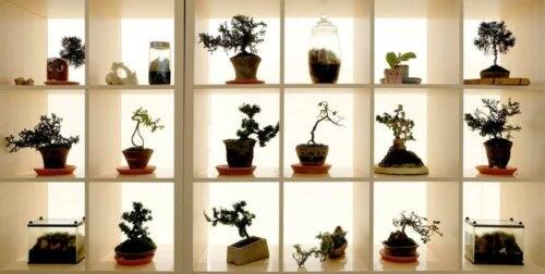 Een bonsai voor iedereen