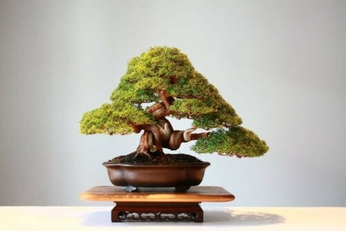 Bonsaibomen: prachtige weelde in het klein