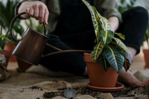 Zo red je een plant die te veel water heeft gekregen