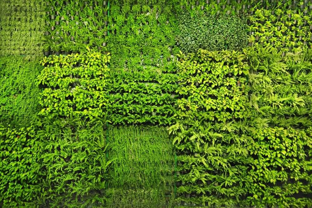 Tuinmuren voor je tuin met planten