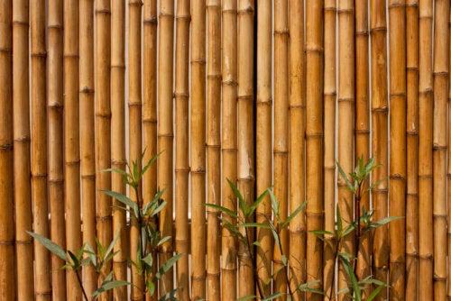 Bamboe schutting voor je tuin