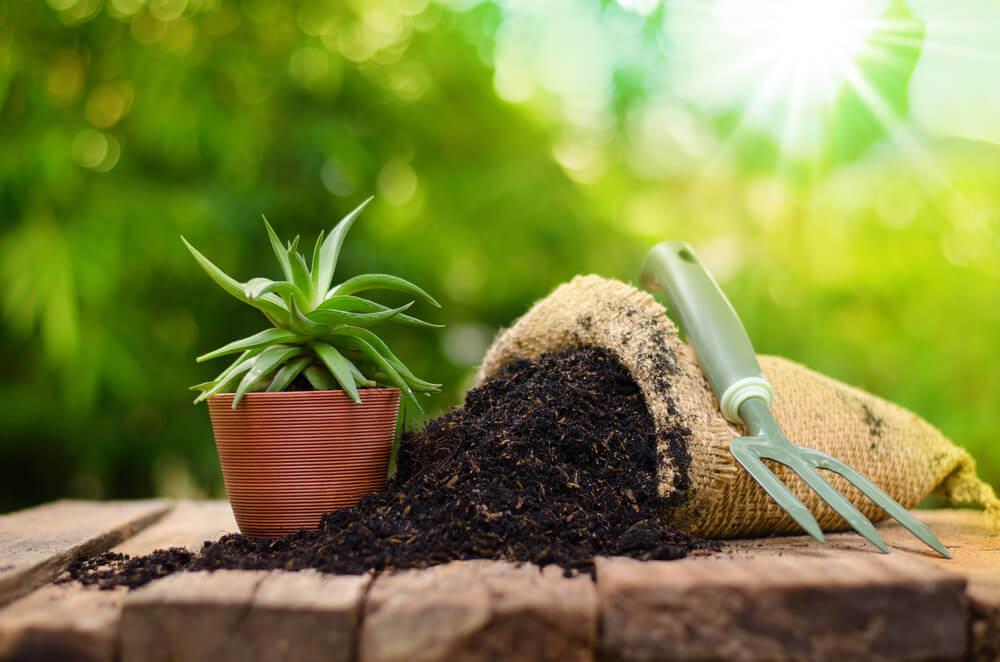 Bemesten van planten