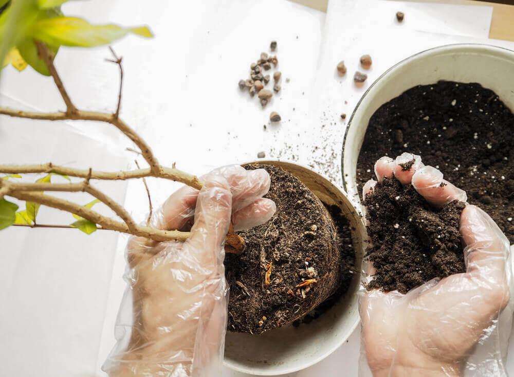 Overpotten van een plant