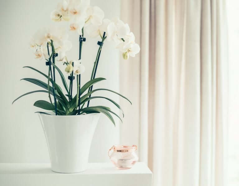 Hoe je voor orchideeën zorgt