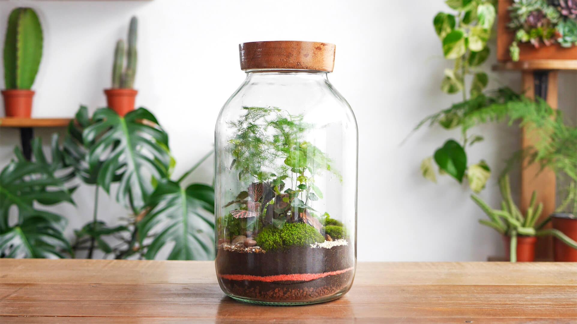 Tuin in een glazen pot
