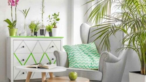 Tips voor het decoreren met kleurrijke planten en bloemen