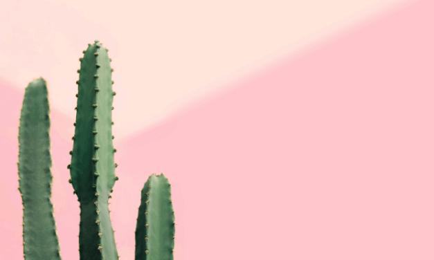 Kolumcactus