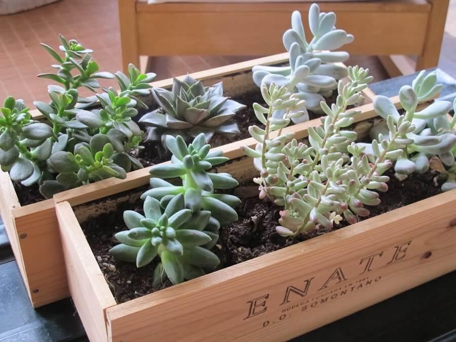 Plantenbakken met vetplantjes