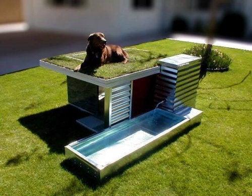 casinhas de cachorro com terraço