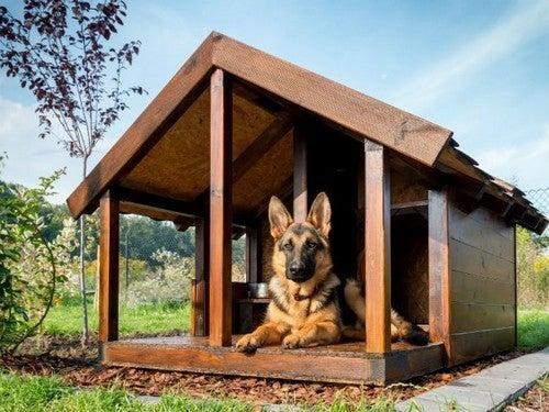 casinhas de cachorro com varanda