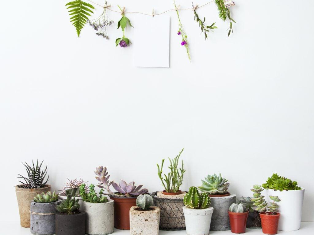 5 sugestões para decorar com plantas