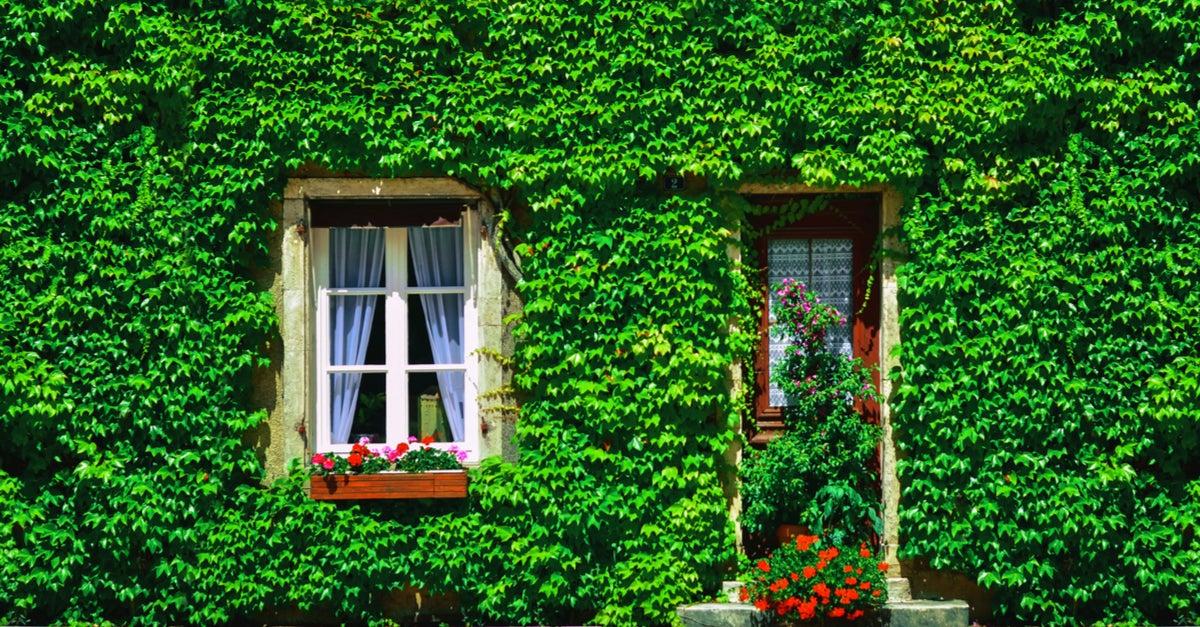 A hera cultivada em exteriores: cercas e muros