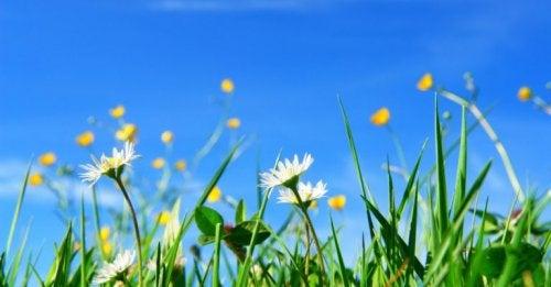 Dicas de como remover as ervas daninhas do seu jardim
