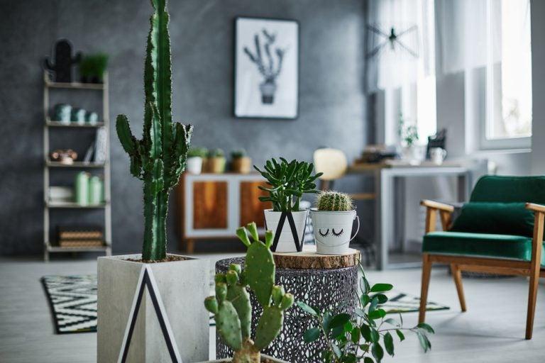 cactus- plantas para os climas secos