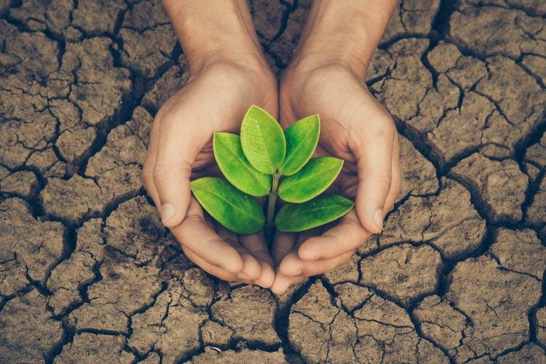 plantas para os climas secos