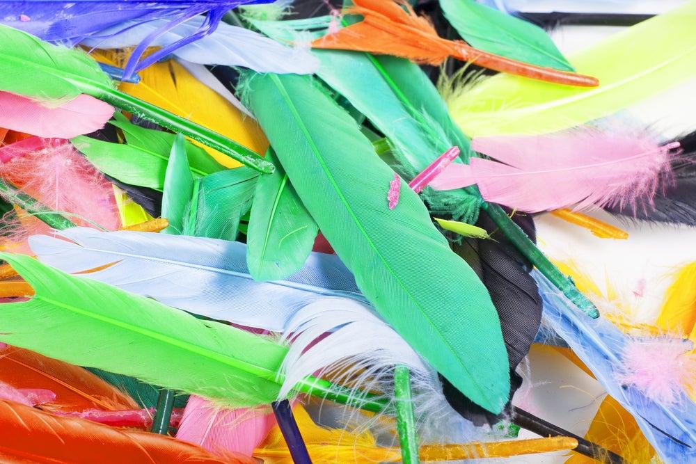 plumas de cores