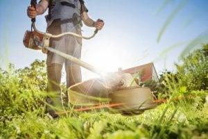 manurenção do gramado